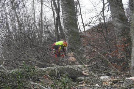 Holzerarbeiten